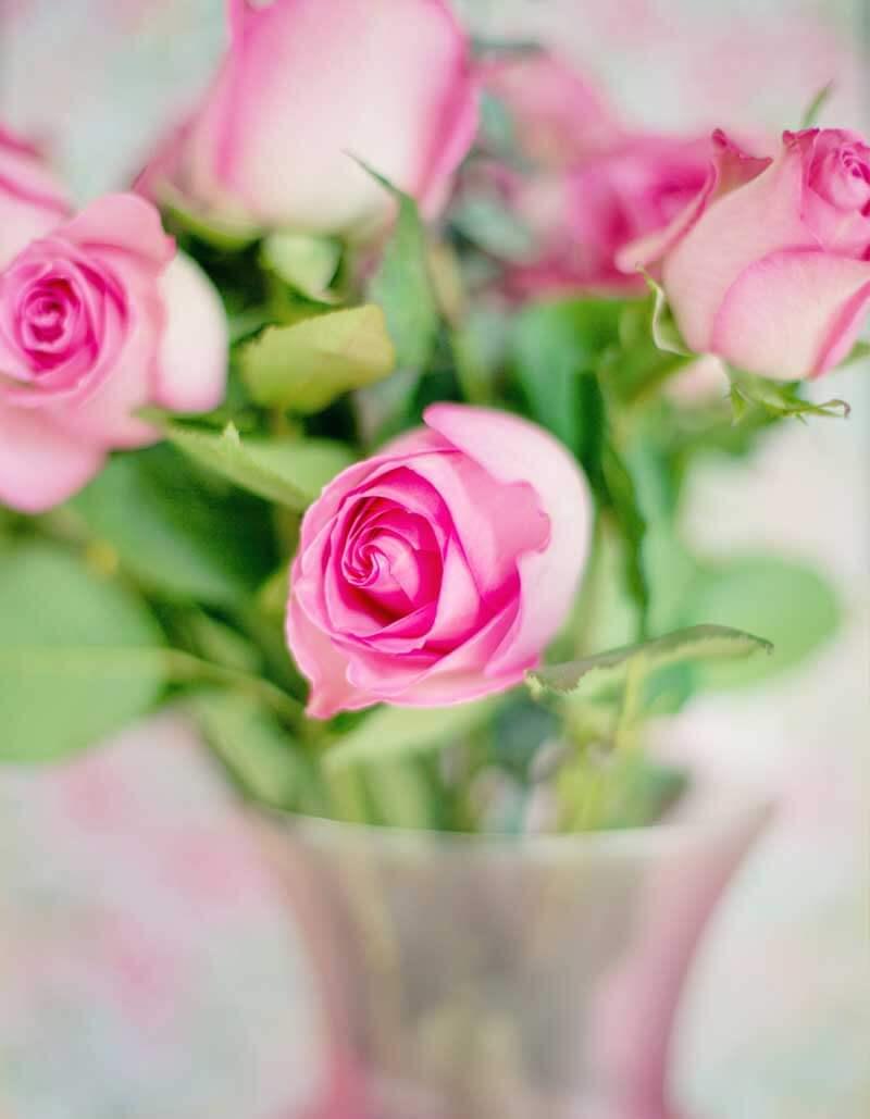 cómo cuidar un ramo de rosas