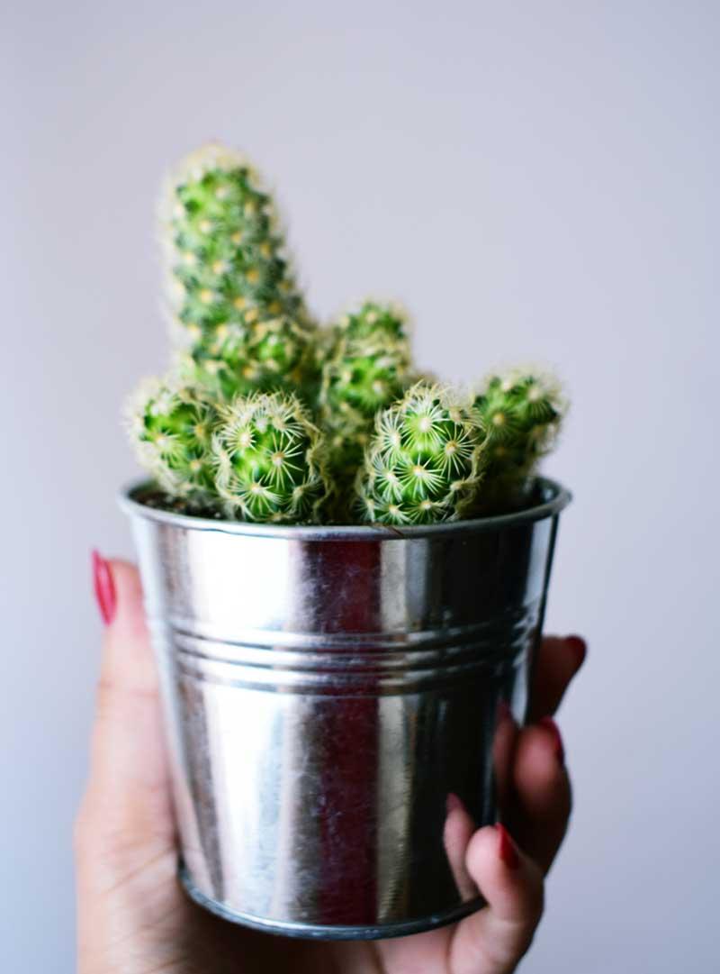 comprar plantas en maceta