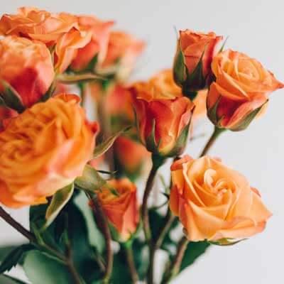 Comprar ramo de rosas naranjas
