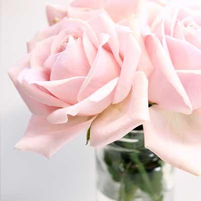 Regalar rosas rosa