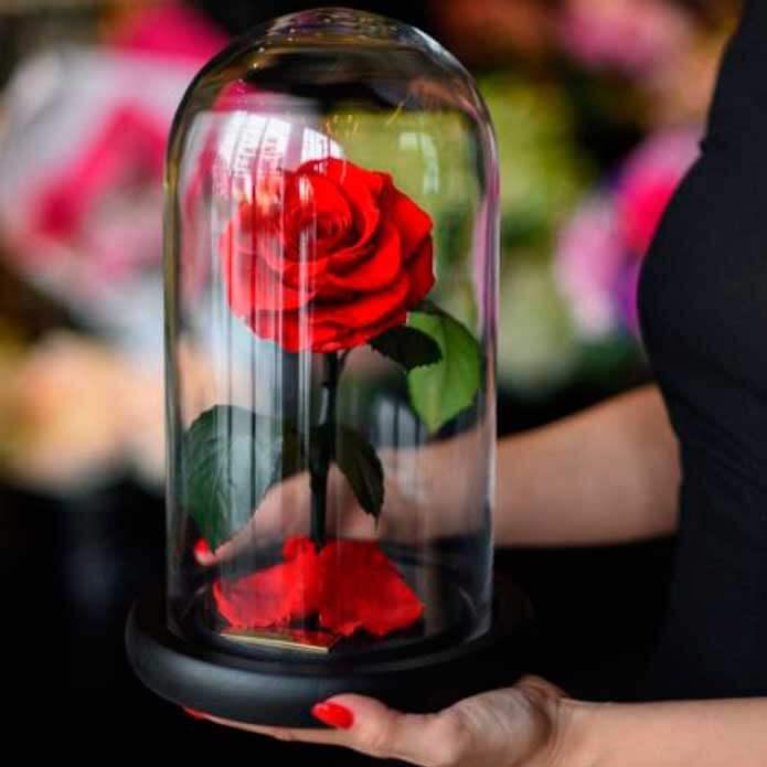 Regalar rosa encantada bella y bestia