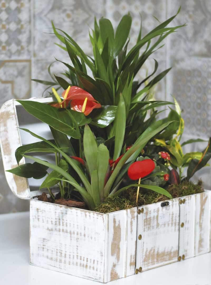 Regalar centros con plantas