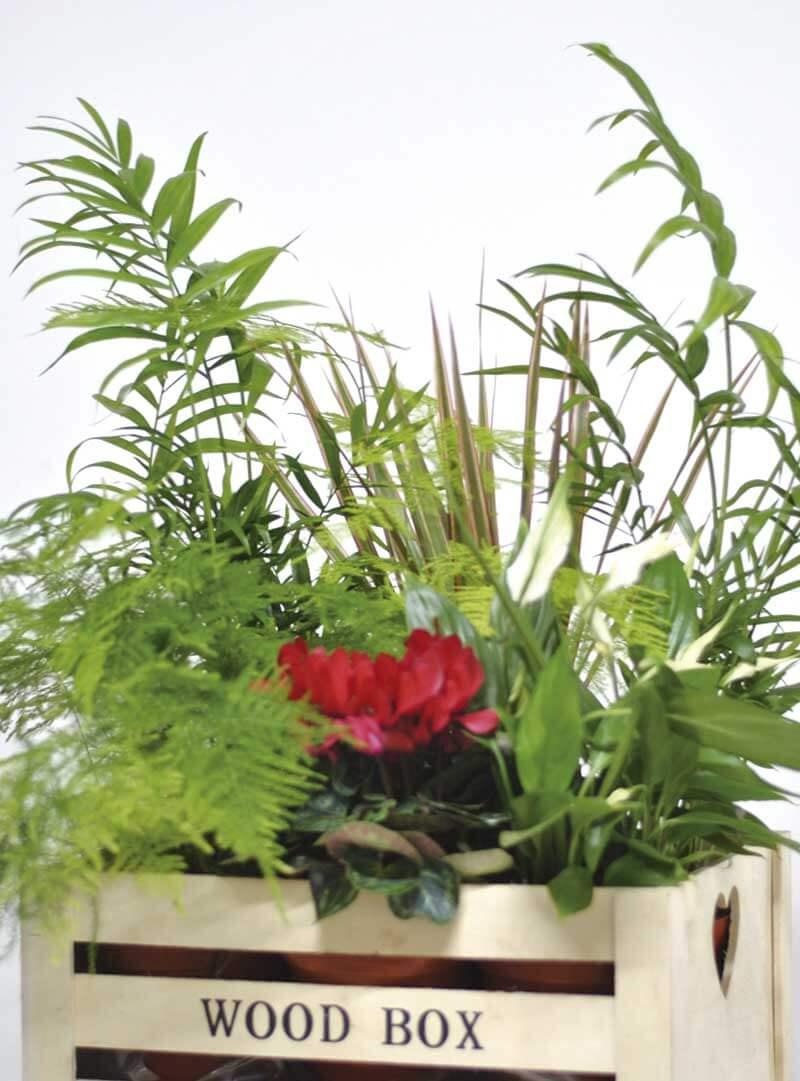 Centros con plantas originales