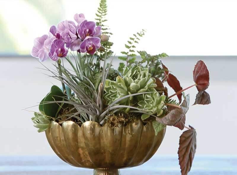 Cestas de orquídeas para regalar