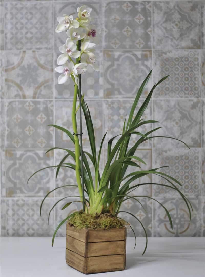 Orquídeas blancas Dendrobium