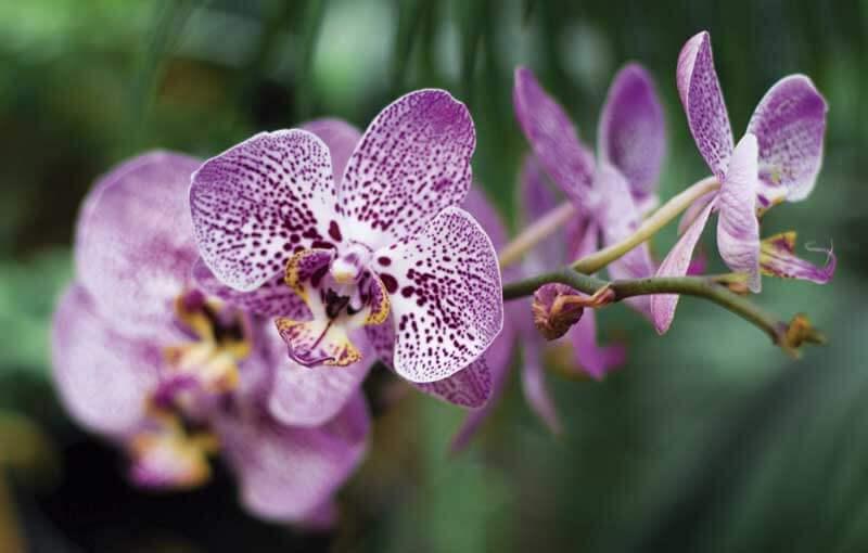 Regalar orquídeas en floristería